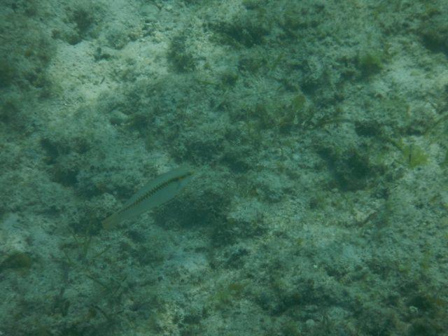 セブ BeResort 魚
