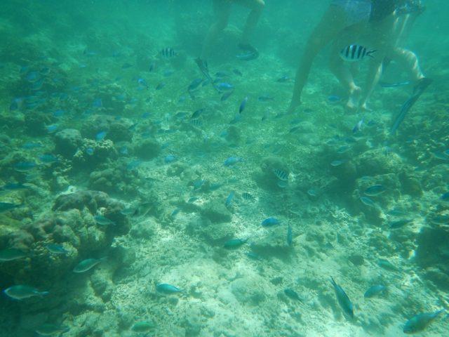 ヒルトゥンガン島 魚