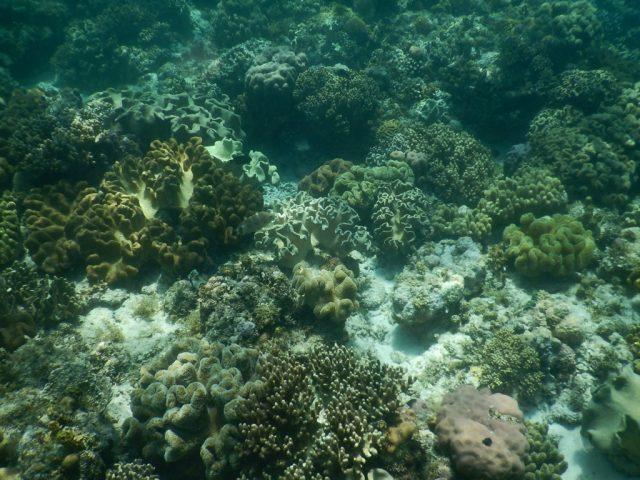 モアルボアル 珊瑚