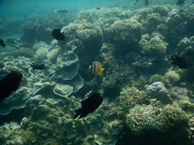 プエルトガレラ サンゴ礁