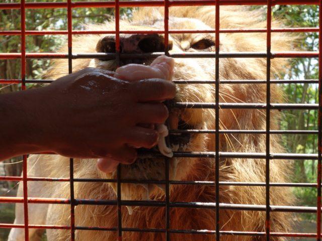 オロンガポ Zoobic Safari