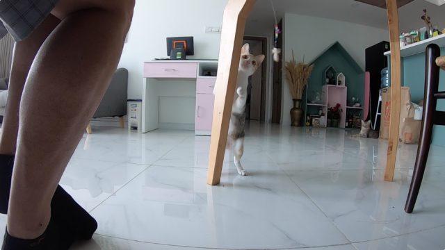 ホーチミン女性猫