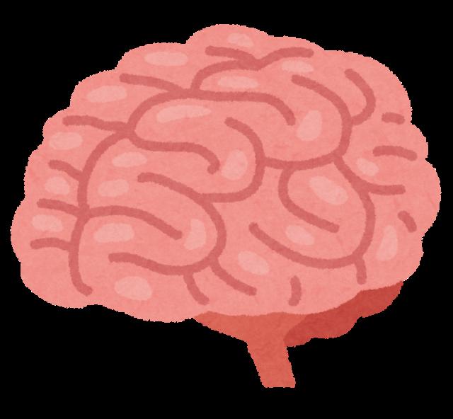 Brain 脳